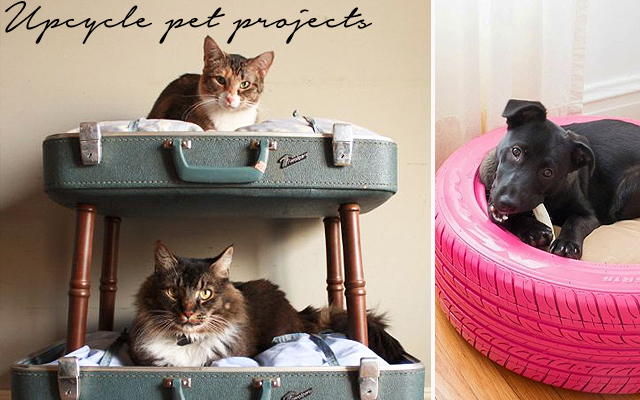 Pet project: upcycling for pets